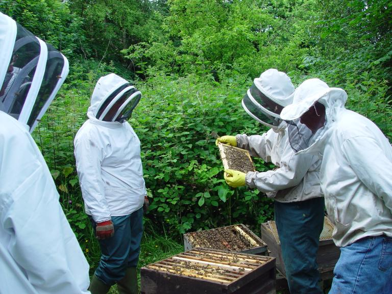 Open Apiary Meeting