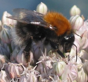 A Tree Bee